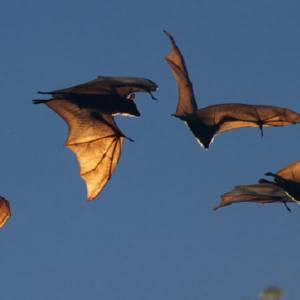 Gratis vleermuisexcursie in Delftse Hout