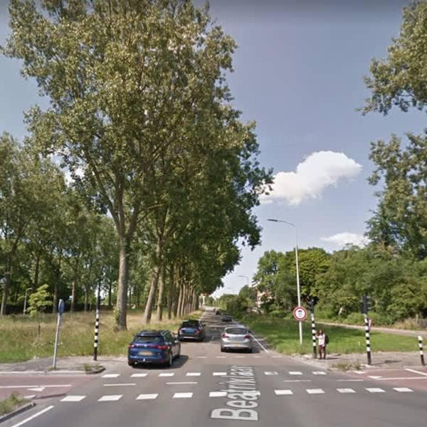 Bomenkap langs de Prinses Beatrixlaan