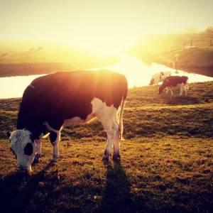 Boerenprotest iets van het verleden? 'Stikstofkiller' van de TU Delft biedt oplossing
