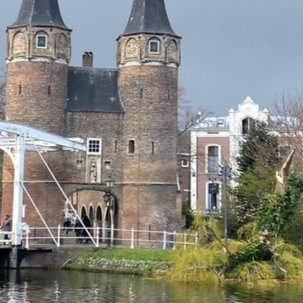40 jaar oude treurwilg bij de Oostpoort Delft gesneuveld