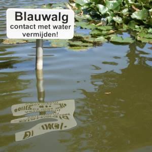 Verkoeling zoeken in Delft? Let (weer) op voor blauwalg!