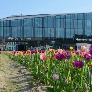 VIDEO: Zo gaat de 'Tuin van Delft' eruitzien